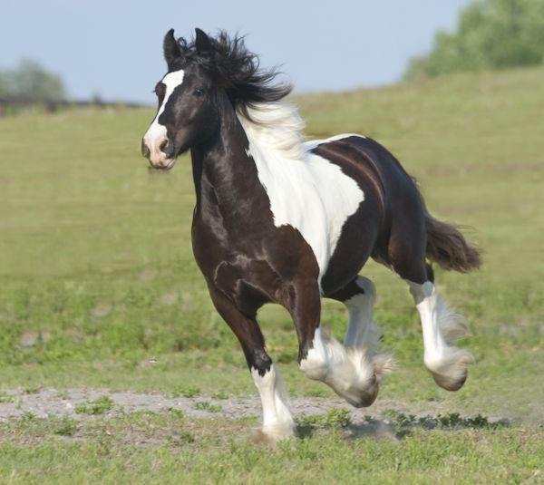 Horse Exhibition Amp Silent Auction Panthertown Benefit