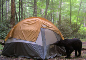 Black Bear Visits Tent
